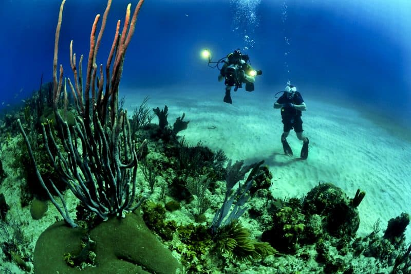 diving around reef