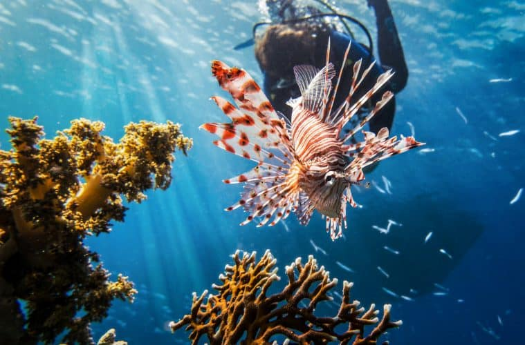 The 7 Best Dive Sites Around the World You Need to Go To