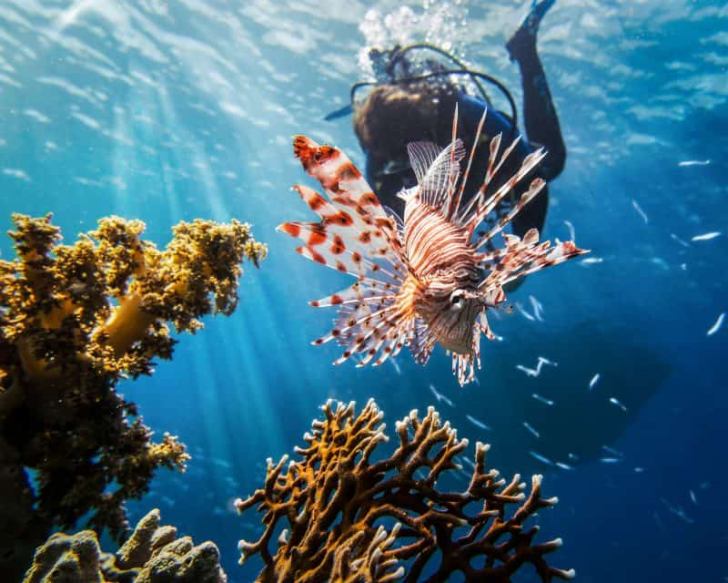 best Dive Sites in the World