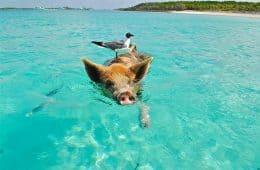 bahamas - off season traveling