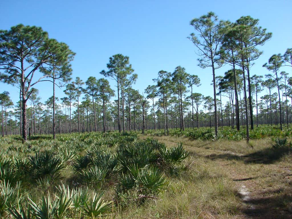 Jonathan Dickinson State Park in Florida