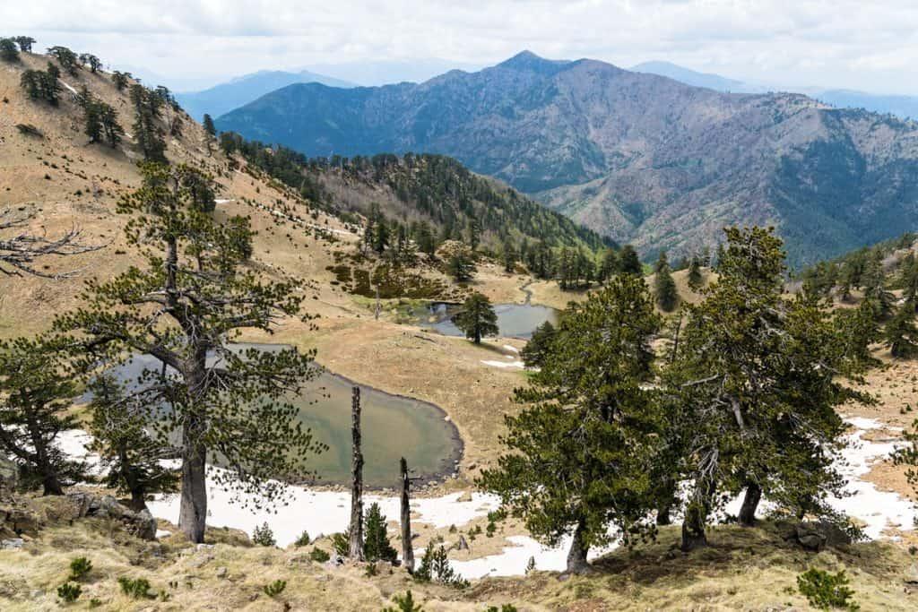 pindus national park fauma