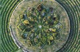 Lavender Labyrinth in Michigan