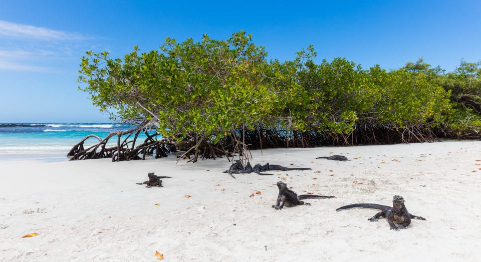 galapagos islands already open for tourists