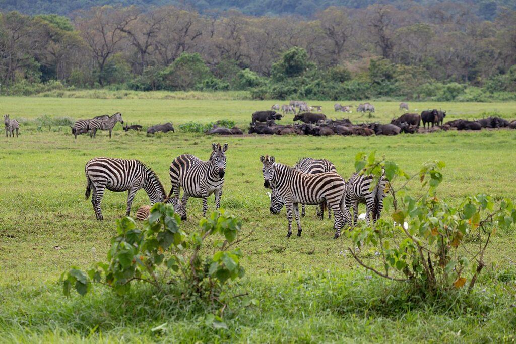 Arusha National Park Tanzania reopening tourism