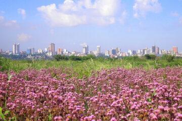 Paraguay abre para el turismo - restricciones de viaje