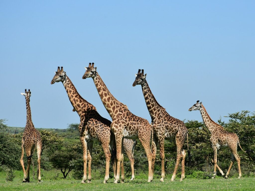 Tanzania reopening tourism - travel restrictions