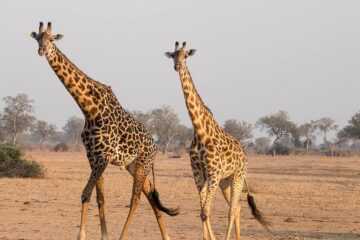Zambia reopening for tourism - travel restrictions